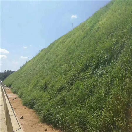 西藏園林景觀公路護坡噴漿工程